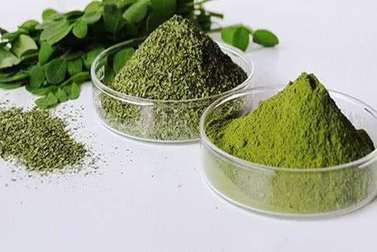 moringa bio oleifera poudre de plante antioxydante feuille gousse naturel puissante