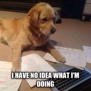 chien avec ordi sous titré je n'ai aucune idée de ce que je fais …